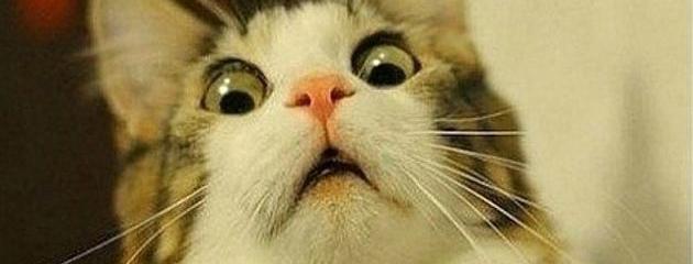 scared-cat-header