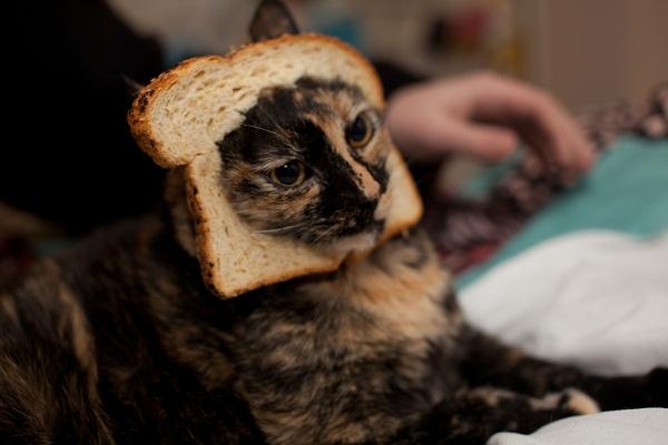 Breaded_Cat