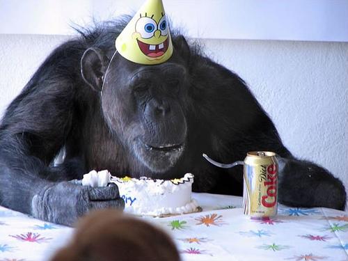 celebration monkey