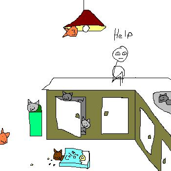 cat-live-in-everywhere